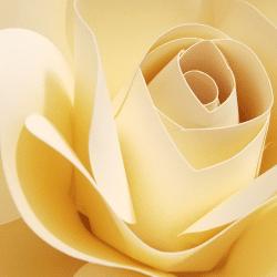 medium paper rose